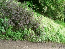 2006-05-14-parc-rothschild-11