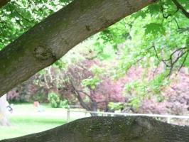 2006-05-14-parc-rothschild-33