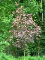 2006-05-14-parc-rothschild-34