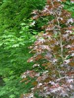 2006-05-14-parc-rothschild-35