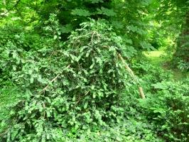 2006-05-14-parc-rothschild-40