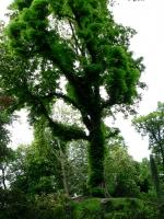 2006-05-14-parc-rothschild-71