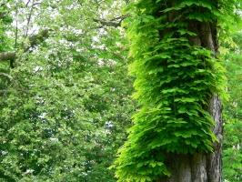 2006-05-14-parc-rothschild-72
