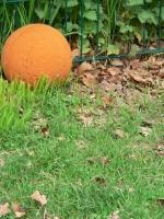 2006-05-14-parc-rothschild-77