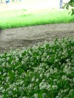 2006-05-14-parc-rothschild-79