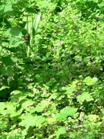 2006-05-14-parc-rothschild-87