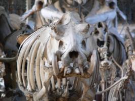 2005-09-17-natural-history-009
