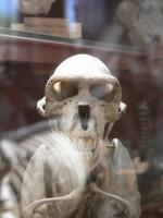 2005-09-17-natural-history-012