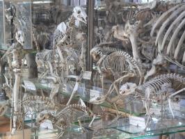 2005-09-17-natural-history-016