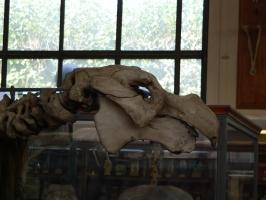 2005-09-17-natural-history-018
