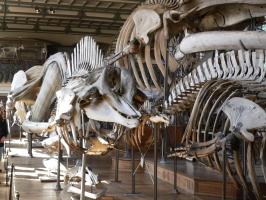 2005-09-17-natural-history-019