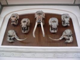 2005-09-17-natural-history-020