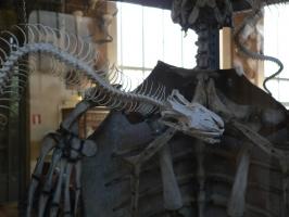 2005-09-17-natural-history-021