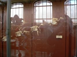 2005-09-17-natural-history-027