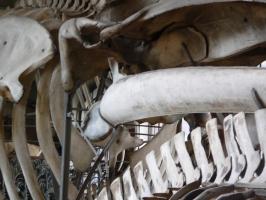 2005-09-17-natural-history-031