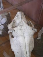 2005-09-17-natural-history-033