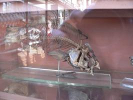2005-09-17-natural-history-036