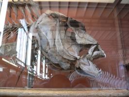 2005-09-17-natural-history-037