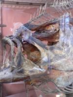 2005-09-17-natural-history-038