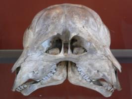 2005-09-17-natural-history-039