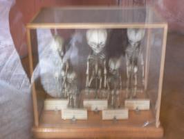 2005-09-17-natural-history-042