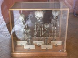 2005-09-17-natural-history-043