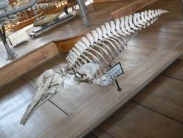 2005-09-17-natural-history-045