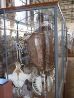 2005-09-17-natural-history-046