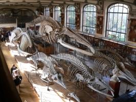 2005-09-17-natural-history-047