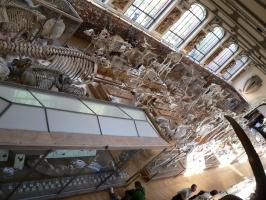 2005-09-17-natural-history-048