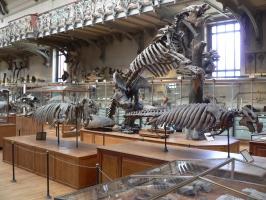 2005-09-17-natural-history-050
