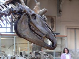 2005-09-17-natural-history-051
