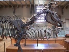 2005-09-17-natural-history-052