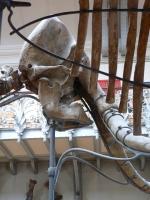 2005-09-17-natural-history-054