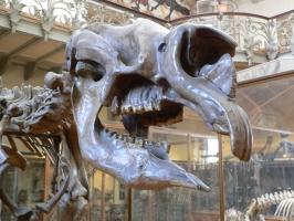 2005-09-17-natural-history-055