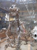 2005-09-17-natural-history-056