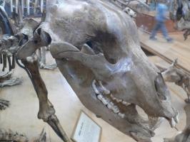 2005-09-17-natural-history-058