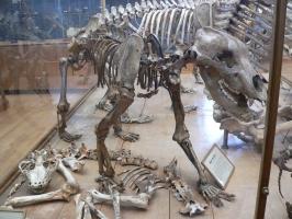 2005-09-17-natural-history-059