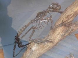2005-09-17-natural-history-062