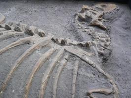 2005-09-17-natural-history-068