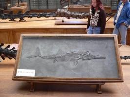 2005-09-17-natural-history-070