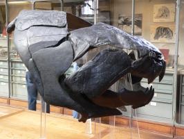 2005-09-17-natural-history-077