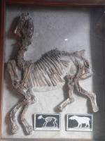 2005-09-17-natural-history-082