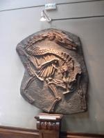 2005-09-17-natural-history-083