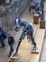 2005-09-17-natural-history-091