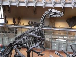 2005-09-17-natural-history-093