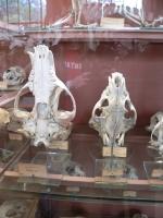 2005-09-17-natural-history-096