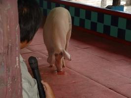 thailand-084