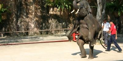 Thailand - 153